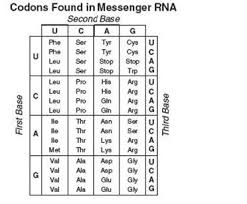 Dna Sequence Chart Use The Following Chart To Determine What Peptide Would Be