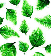Tropical Desktop Wallpaper Tumblr (Page ...