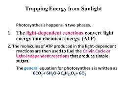 14 trapping energy from sunlight photosynthesis happens in two phases the light dependent reactions