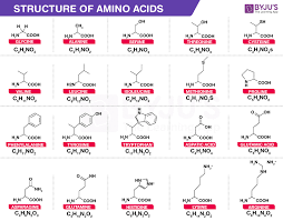 Amino Acid Characteristics Chart Amino Acids Properties Functions Sources And Its