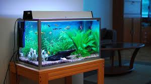 Fish Tank Aquarium Reviews Large, Beginner and Nano Aquariums for Home Use