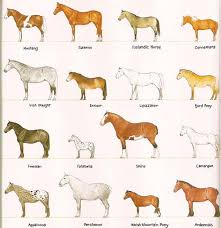Horse Breeds Size Comparison Different Horse Breeds
