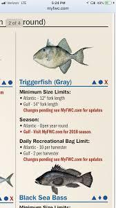 Triggerfish Fine Florida Sportsman