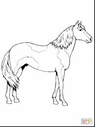 Superb Paso Fino Horse Coloring Page With Printable Horse Coloring