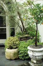 potted trees potted plants patio
