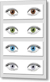 Eye Color Chart Eye Color Chart In Dominant Order Of Occurrence Brown Green Blue And Gray Isolated Vector Illustration On White Background Metal Print