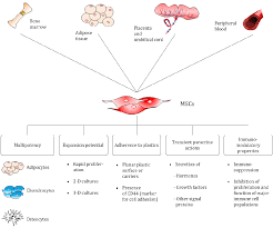 Figure 1 From Mass Production Of Mesenchymal Stem Cells