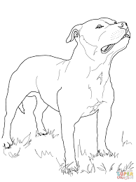 Small Picture Staffordshire Bull Terrier Coloring Page Free Printable In Boston