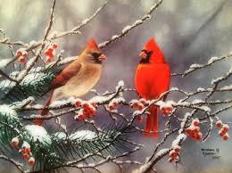 winter cardinal wallpaper. Delighful Winter Winter Cardinals  Birds U0026 Animals Background Wallpapers On Desktop Nexus  Image 2044157 With Cardinal Wallpaper D