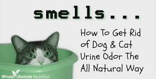 my bedroom smells like pee. get rid of dog and cat urine odors the all natural way! my bedroom smells like pee