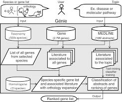 Chicken Genetics Chart