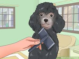 Andis Poodle Chart How To Groom A Poodle With Pictures Wikihow