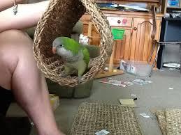 use a placement as a homemade shelter parakeet toysatiel