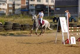 Покупка лошади темперамент характер масть пол лошади возраст  Собственная лошадь