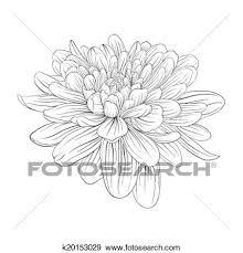 美しい モノクローム 黒いそして白い ダリア 花 隔離された 白 バックグラウンド クリップアート