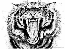 Small Picture Emejing Coloring Pages Tigers Realistic Pictures Coloring Page