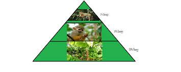 food web pyramid tropical rain forest travel blog food web and energy pyramid