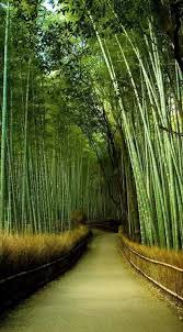 Small Picture 77 best Bamboo images on Pinterest Landscaping Bamboo garden