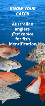 Australian Reef Fish Species Chart Idfish Fish Identification Application