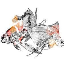realistic koi fish drawing. Modren Drawing Goldfish Pair Of Two Fish Orange Fish Wedding Download  Digital Drawing Illustration Realistic Art Ink In Koi Drawing