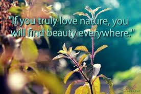 Quotes About Nature And Beauty Best Of 24 Most Beautiful Quotes About Nature And Environment Beauty