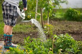 denver garden centers. Newbie Vegetable Gardening Tagawa Gardens Denver Garden Centers
