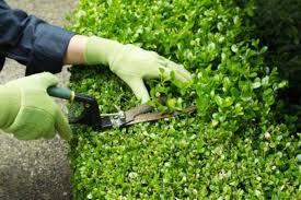best gardening gloves. Best Gardening Gloves 2017 \u2013 Buyers Guide E