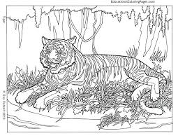 Small Picture Life of Pi Animal Coloring Pages Educational Fun Kids Coloring