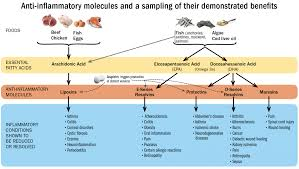Anti Inflammatory Foods Chart Inflammation Might Be The Root Of Preventable Disease