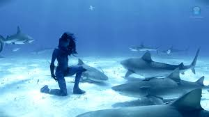 Real underwater world Beautiful Mermaid Dancing With Sharks Why Did This Woman Risk Her Life In This Stunning Footage Larastock This Australian Model Went Swimming Underwater Su