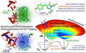 femtosecond chemistry. aided by femtosecond transient absorption, normal mode calculations and molecular dynamics simulations, demonstrate the unique resolving power of fsrs chemistry c