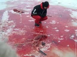 outrage palm beacher rod stewart flaunts baby seal fur coat