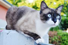 What Can I Give My Cat For Pain Canna Pet
