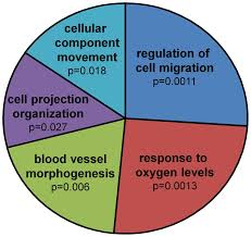 Oxygen Pie Chart Pie Chart View Of Revigo Results The Single Go Terms Table