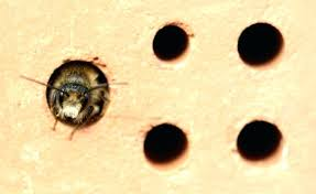 s carpenter bee house plans cts orgacally aroud