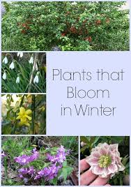 937 Best Container Gardening Images On Pinterest  Garden Ideas Container Garden Ideas For Winter