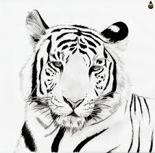 running tiger clipart black and white. Clipart Info And Running Tiger Black White