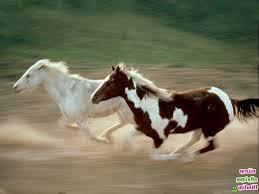 صور اجمل احصنة في العالم images?q=tbn:ANd9GcS