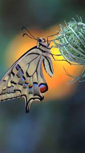 Butterfly 4K Wallpapers