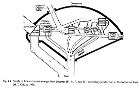 Top 3 Models Of Energy Flow In A Community Ecology