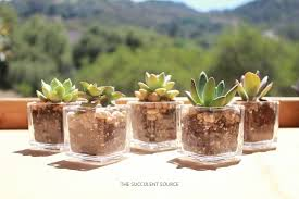 Succulents in votives for wedding centerpieces