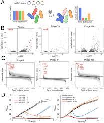 Lytic And Lysogenic Cycle Venn Diagram Genome Wide Crispr Dcas9 Screens In E Coli Identify