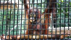 zoo animals in cages. Brilliant Animals Sarah Karacs With Zoo Animals In Cages