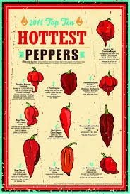 Hot Peppers Stuffed Peppers Stuffed Hot Peppers Mexican
