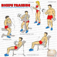 Biceps Exercise Chart Tune1st A Free Online Resource Fitness Fitness Guidance