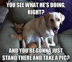 cats and dogs fighting quotes. Funny Cats And Dogs Fighting For Quotes