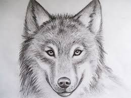 Cool Drawings Of Animals Pencil Art Drawing In 2019 Wolf