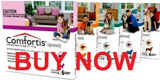 comfortis best price. Brilliant Comfortis Buy Comfortis For Dogs Without Prescription Cheap And Best Price I