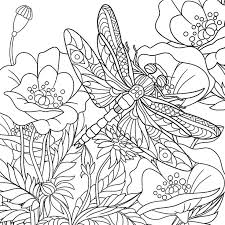 Small Picture 727 best Animal Coloring Pages for Adults images on Pinterest