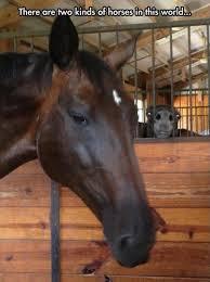 20 Hilarious Horse Memes – Hoofbeats And Heartbeats via Relatably.com